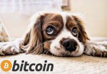 bitcoin pes smutny