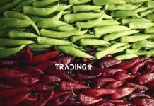 MACD zelena cervena analyza trading11
