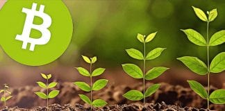 bitcoin growth up to green plant