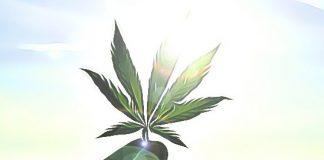 marihuana akcie rast rychly boon bitcoin