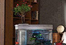 xiaomi_titulka_aquarium_gadget_km_ok